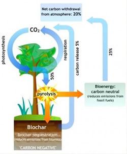 the carbon negative process