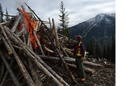 thinning and burning wood