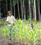 a crop of unenhanced corn